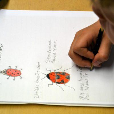 Insektenforscher